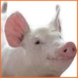 紅の豚 なぜ豚